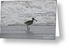 Willet With A Catch Greeting Card