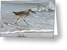Willet With Mole Crab Greeting Card