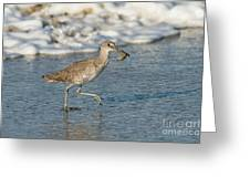 Willet With Sand Crab Greeting Card