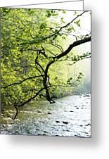 Williams River Mist Greeting Card
