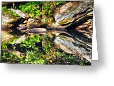 Williams River Reflections Greeting Card by Thomas R Fletcher