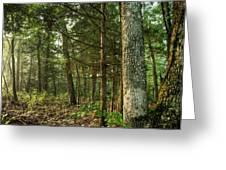 William's Woods Greeting Card