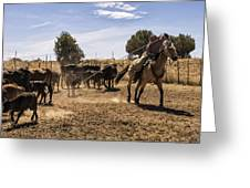 Williamson Valley Roundup 21 Greeting Card