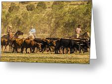 Williamson Valley Roundup 7 Greeting Card