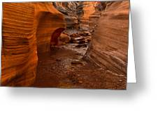 Willis Creek Slot Canyon Greeting Card by Robert Bales