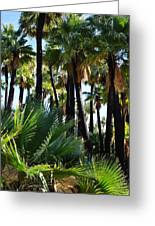 Willis Palm Oasis Greeting Card