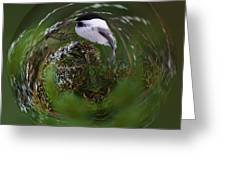 Willow Tit Ball Greeting Card