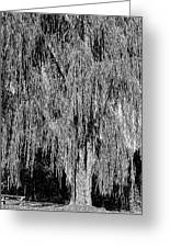 Willow Tree Greeting Card by Paul Gioacchini