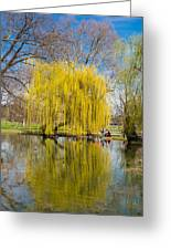 Willow Tree Water Reflection Greeting Card by Matthias Hauser
