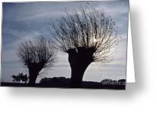 Willow Trees In Winter Greeting Card