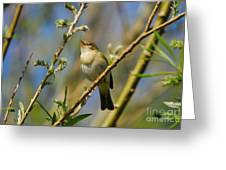 Willow Warbler Singing In Spring Greeting Card by John Kelly