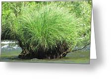 Willow Water Greeting Card
