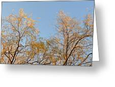 Willows And Sky Greeting Card