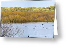 Willows Of October Greeting Card