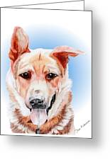 Willy A Former Shelter Sweetie Greeting Card
