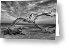Wind Bent Driftwood Black And White Greeting Card