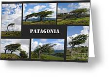 Wind-bent Flag Trees In Tierra Del Fuego Greeting Card