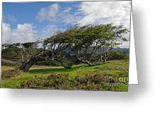 Wind-bent Tree In Tierra Del Fuego Patagonia  Greeting Card