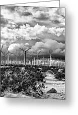 Wind Dancer Palm Springs Greeting Card by William Dey