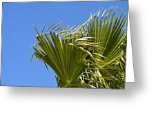 Wind In The Palm Greeting Card
