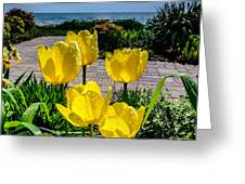 Wind Point Tulips Greeting Card