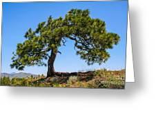 Lonesome Pine Tree Greeting Card