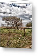 Wind Swept Kansas Tree Greeting Card