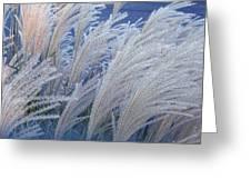 Windblown Greeting Card