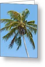 Windblown Coconut Palm Greeting Card