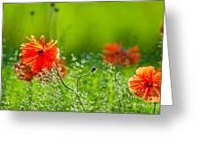 Windblown Poppies Greeting Card