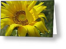 Windblown Sunflower One Greeting Card