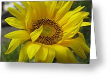Windblown Sunflower Three Greeting Card