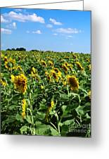 Windblown Sunflowers Greeting Card