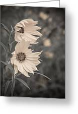 Windblown Wild Sunflowers Greeting Card