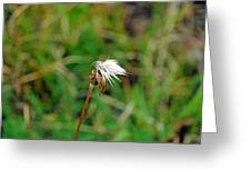 Winded White Greeting Card