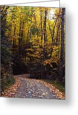 Winding Road - Fall Color Greeting Card
