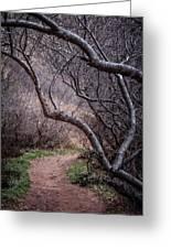 Winding Trail Greeting Card