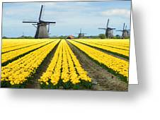 Windmills And Tulips Greeting Card