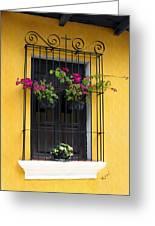 Window At Old Antigua Guatemala Greeting Card