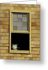 Window Cat    No. 2 Greeting Card