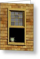 Window Cat    No.3 Greeting Card