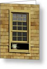 Window Cat    No.4 Greeting Card