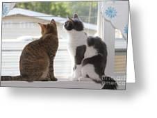 Window Cats Greeting Card