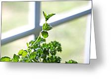 Window Herb Garden Greeting Card