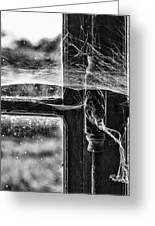 Window Spiders Web Greeting Card