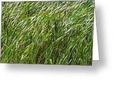Windswept Cattails Greeting Card