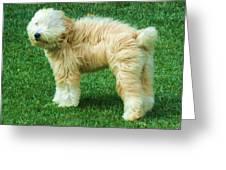 Windswept Dog Greeting Card