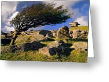 Windswept Hawthorn Tree Greeting Card