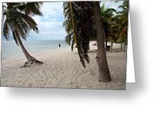 Windswept Palms Greeting Card
