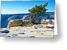 Windswept Tree On Top Of Sentinel Dome In Yosemite Np-ca Greeting Card